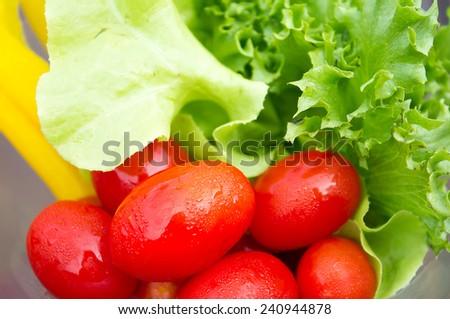 fresh Salad vegetables close up. - stock photo
