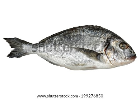 fresh seabream isolated on white background