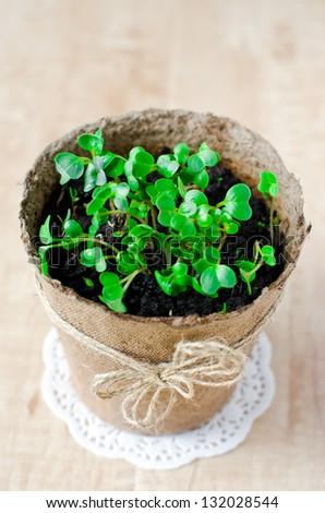 Fresh watercress salad - stock photo