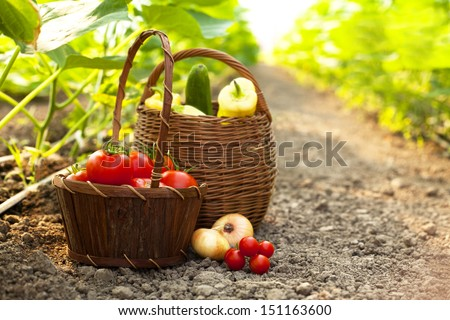 freshly harvested vegetables - stock photo
