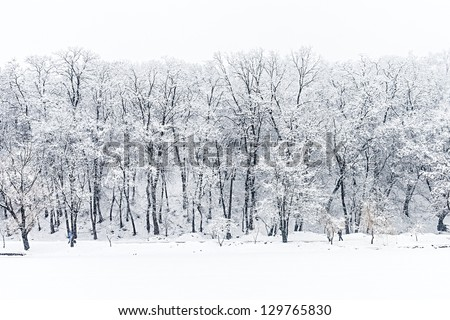 frozen trees in winter forest - stock photo