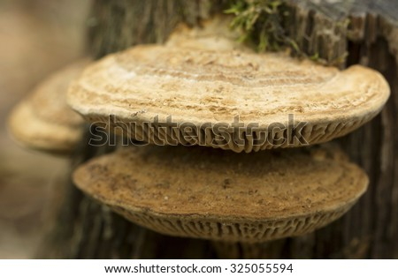 Fungus on a tree, macro photo ( selective focus) - stock photo