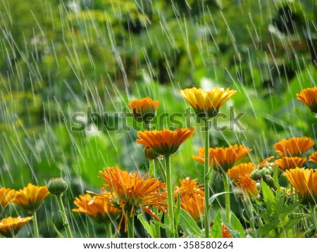 Garden flowers in rain. Summer flower background. Natural backgrounds - stock photo