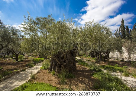 Garden Of Gethsemane Stock Images Royalty Free Images Vectors