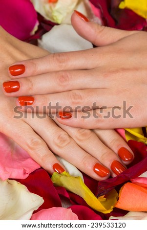 Gel nails are covered with red polish. Spa treatment for hands. Hands on a background of rose petals in spa salon.