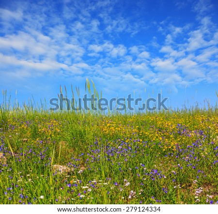 Gentle hills covered with a carpet of wild flowers. Spring flowering Golan, Israel - stock photo