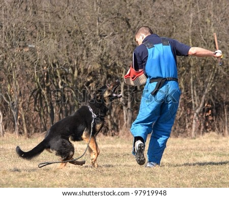 German shepherd - dog at a dog training center - stock photo