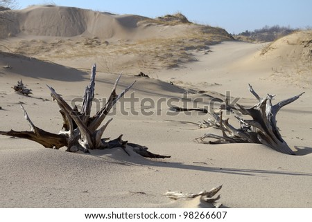 """Ghost Forest"" -- Sand Dunes - Silver Lake State Park, Mears, Michigan, USA"