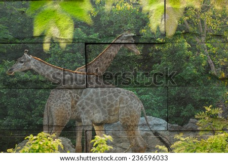 """giraffe"" Mural. The stone painting  concept"