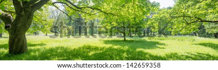 stock-photo--glade-in-the-