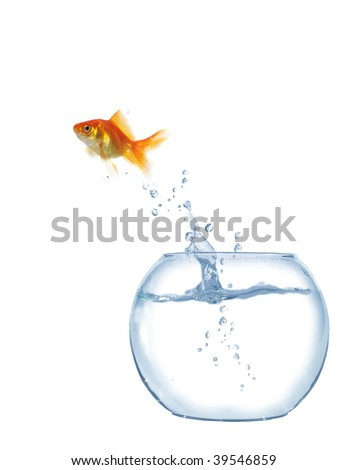gold  jumping out from round glass aquarium fish - stock photo