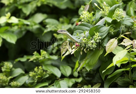 Golden tree snake relax on the leaf - stock photo