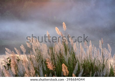 grass/grass flower background in nature.