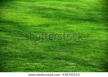 grass leaves background
