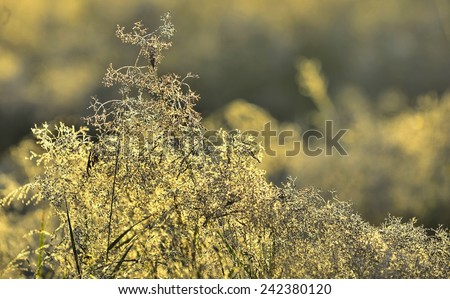 Grass lit by the sun against an autumn meadow background  - stock photo
