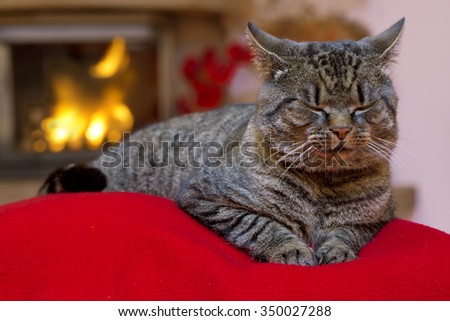 Gray Cat  and a fireplace. - stock photo