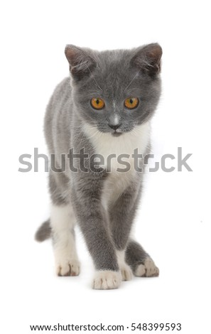 gray cat is isolated on a white background