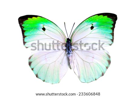 green butterfly isolated - stock photo