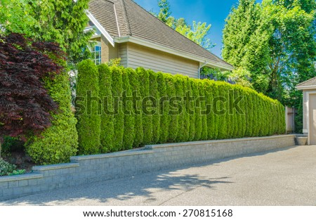 """Green fence ' from evergreen plants dividing the street and private property. Keeps privacy and security. Landscape trimming design. - stock photo"