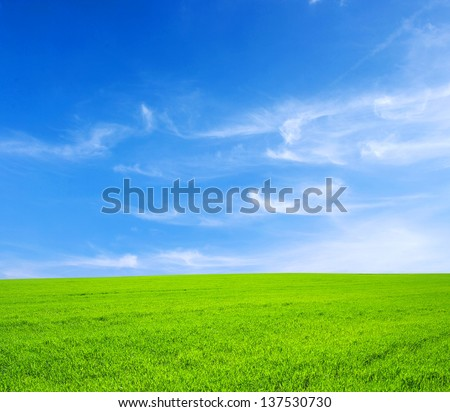 green grass field and bright blue sky - stock photo