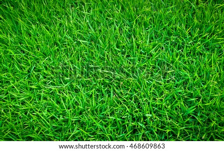 Green lawn,backyard background