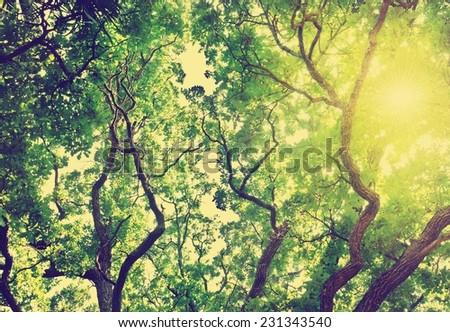 Green leaves. Retro stale. - stock photo
