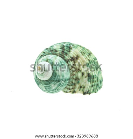 green spiral and curly shell texture