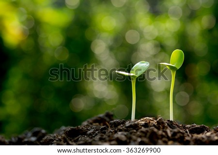 Green sprouts growing out from soil in the morning light - stock photo