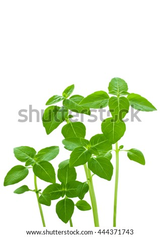 Green sprouts isolated on a white