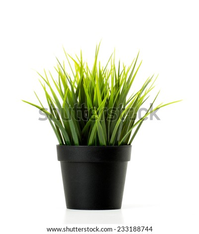 green sunny grass in dark flowerpot isolated on white