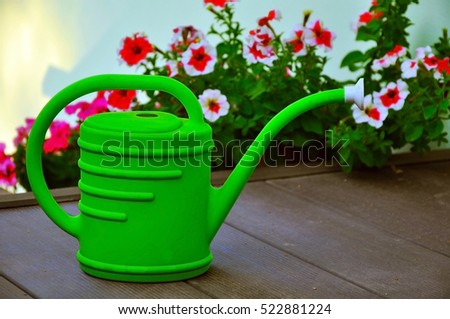 green watering can against the background of the blossoming petunias