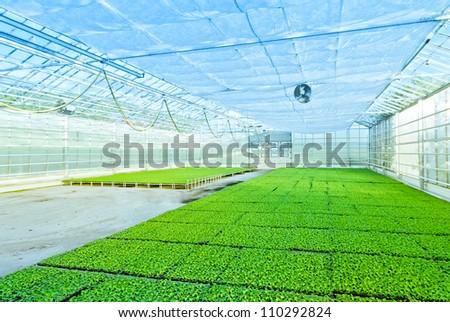 greenhouse plant - stock photo