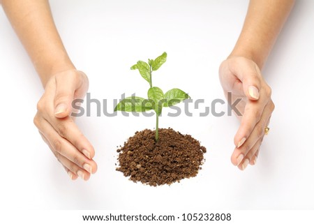 : Hands protecting a baby plant isolated on white background - stock photo