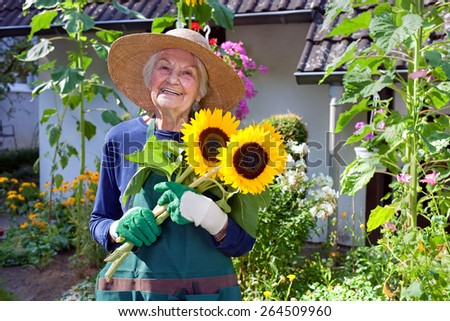 Happy Senior Woman with Hat, Apron and Gloves for Gardening Holding a Bouquet of Fresh Sunflowers at the House Garden. - stock photo