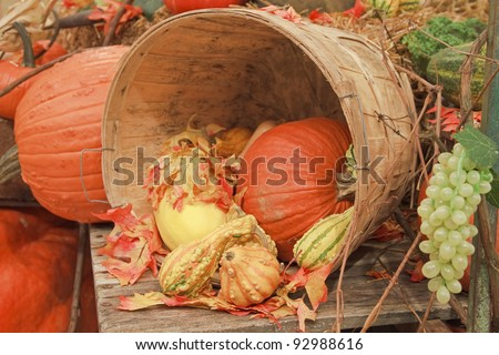 """Harvest Time"" - A fall harvest display. - stock photo"