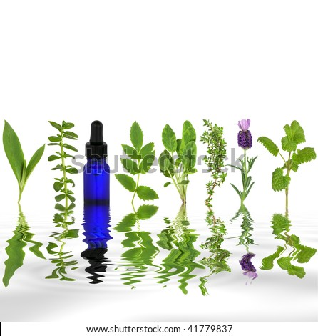 Herb leaf selection of comfrey, peppermint, valerian, sage, thyme, lavender and lemon balm with an aromatherapy essential oil glass dropper bottle with reflection in rippled grey water. - stock photo