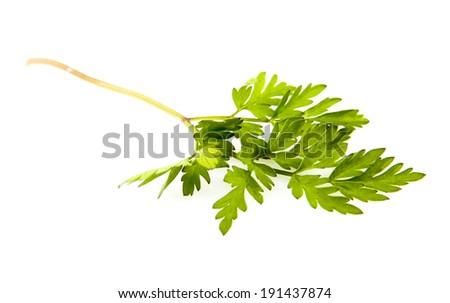 Chervil Stock Images RoyaltyFree Images Vectors Shutterstock