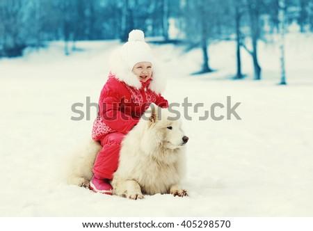 �hild and white Samoyed dog walking in winter day - stock photo