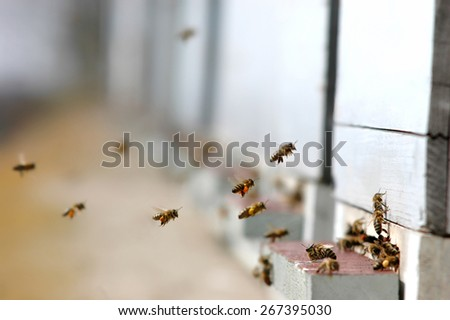 Honey bees which collect pollen end enter their hive-Selective focus - stock photo