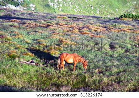 horse on the mountain pasture with mountains in the background - stock photo