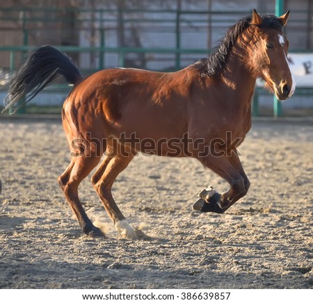 horse running in the paddock