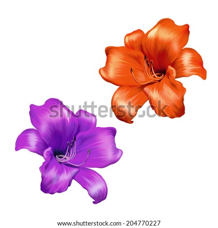 illustration of Bright pink and red lily flower. isolated on a white background