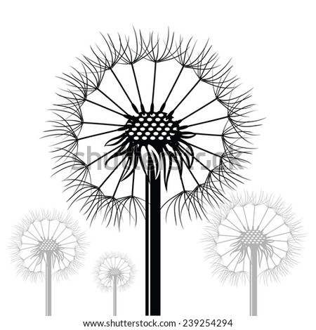 illustration  with dandelions silhouettes  on white background - stock photo