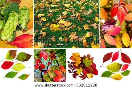 image of autumn leaves in a park close-up