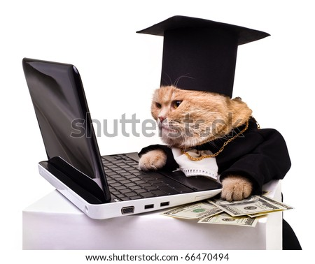 intelligent cat for the laptop.Animal in the academic robes on a white background.year  cat.financial success - stock photo