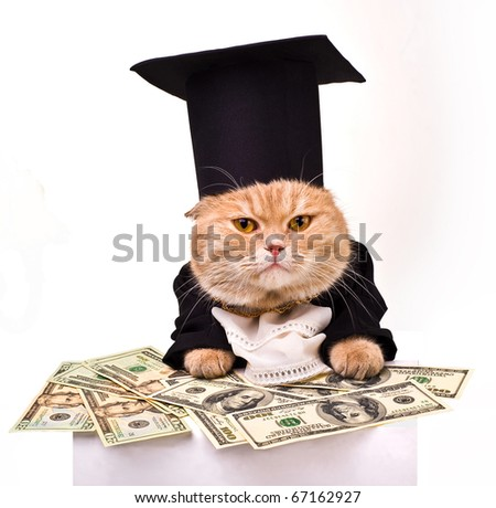 intelligent cat for the money.Animal in the academic robes on a white background..financial success.New Year. - stock photo