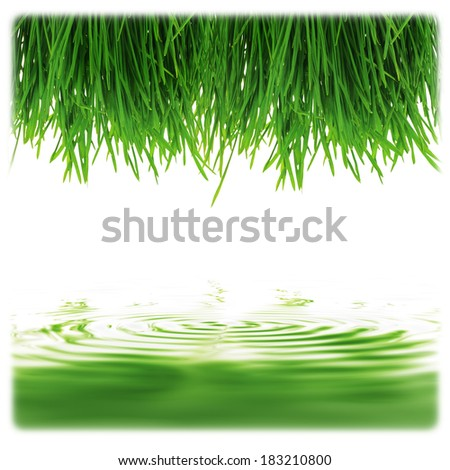 isolated fresh green grass on white background with reflex effect - stock photo