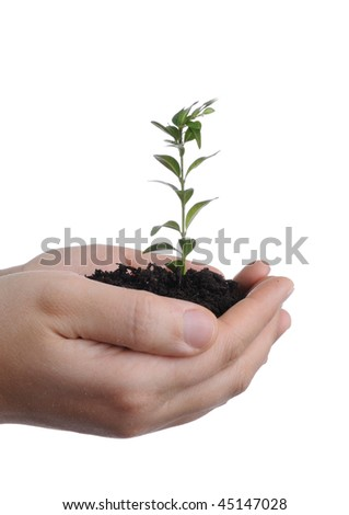 isolated woman's hands keep soil and plant