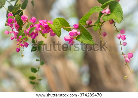 Ivy pink heart shaped flowers leaves stock photo royalty free ivy with pink heart shaped flowers and leaves in garden mightylinksfo
