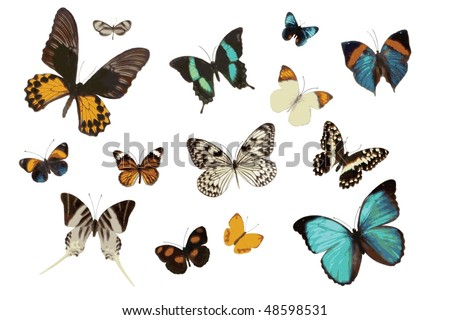 .jpg Collection of Art Butterflies